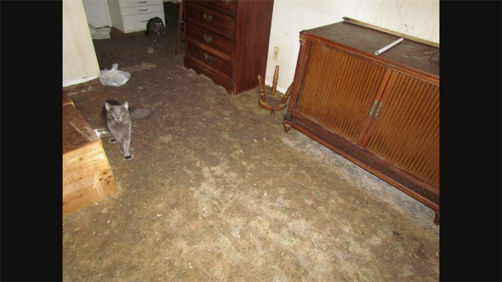 City officials say they found 60 cats living in filth with feces a half-inch thick on the floor along with cat urine throughout the entire house in 2011. (Source: 3TV)