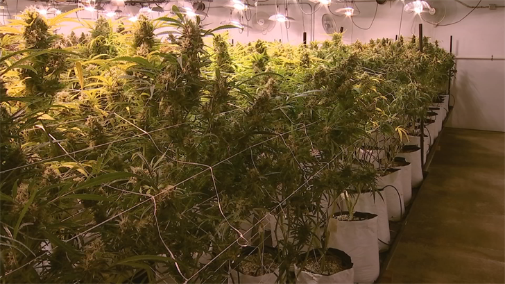 A state lawmaker plans to proposal a measure that would require medical marijuana products to undergo independent tests for safety and accurate labeling for the first time in Arizona. (Source: 3TV/CBS 5)