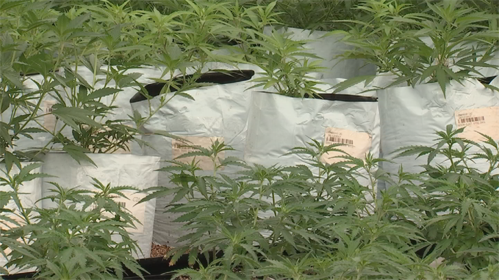 Unlike most states with medical marijuana programs, Arizona does not establish contaminant standards for cannabis or require that cannabis products be tested in any way. (Source: 3TV/CBS 5)