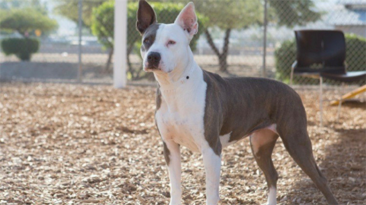 Holly is a hospice looking for a loving forever home. (Source: Arizona Humane Society)