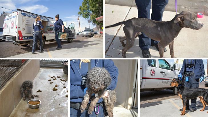 The Arizona Humane Society rescued 49 animals from a boarding facility in Phoenix. (Source: Arizona Humane Society)