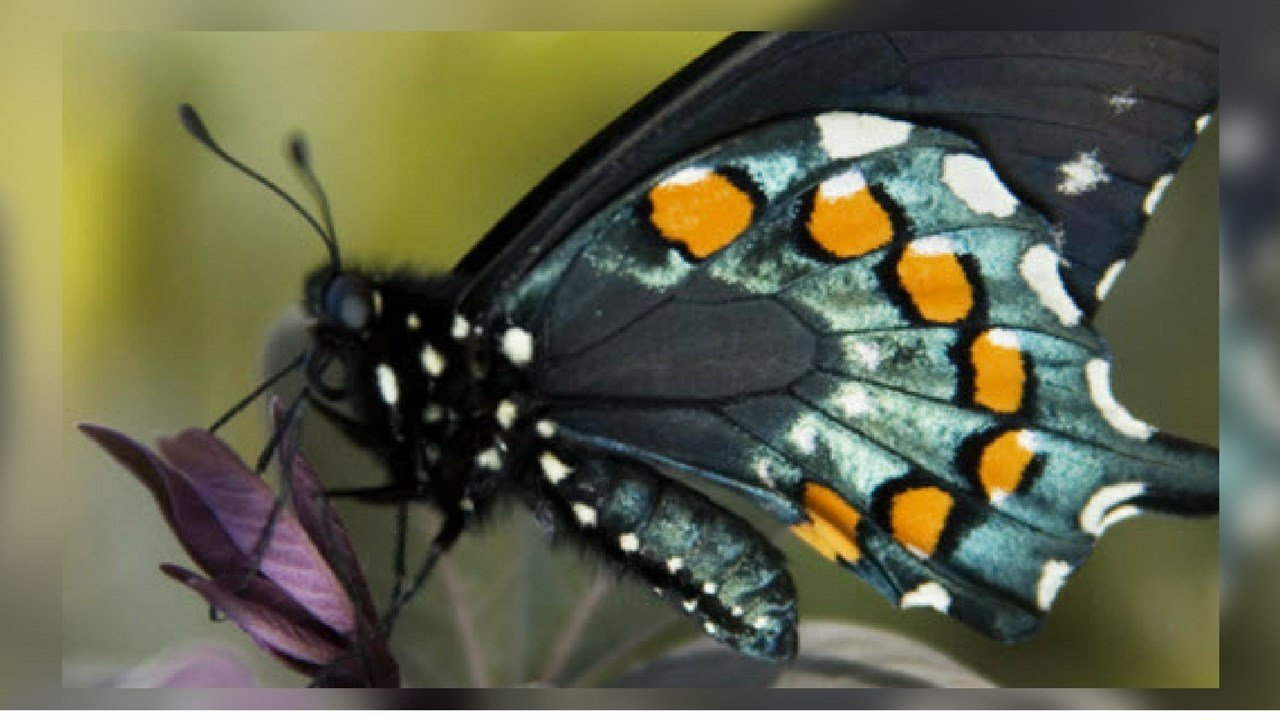 Guests will be able to see hundreds of butterflies at the exhibit (Source: Desert Botanical Garden)