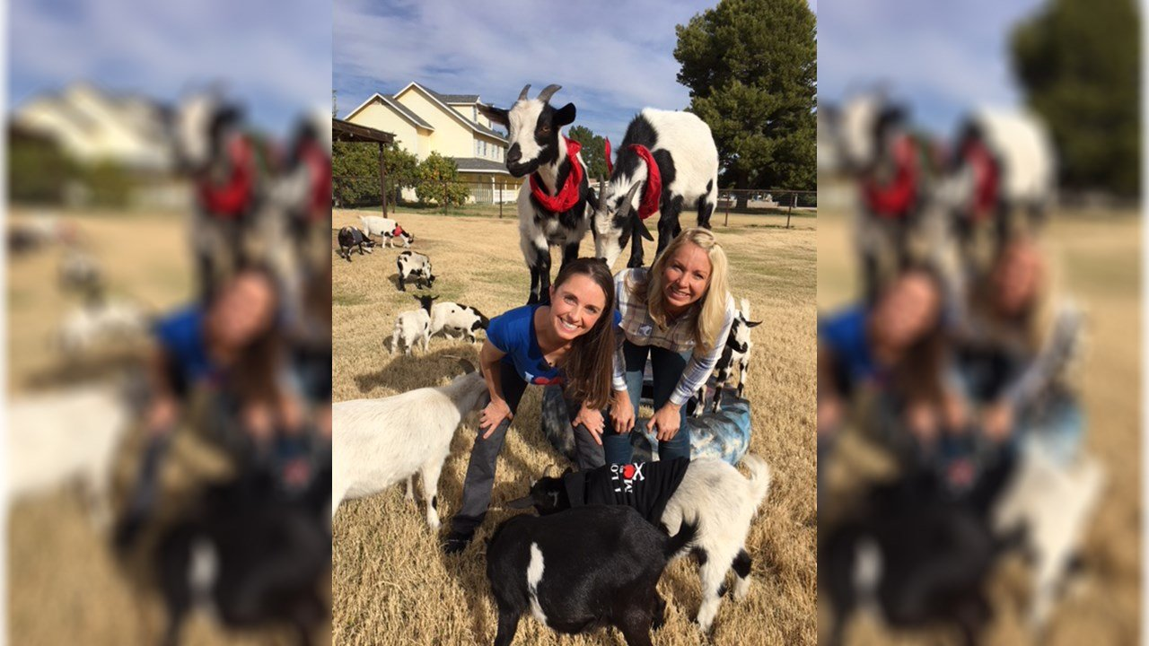 Team Goat Yoga is made up of Sarah Williams and April Gould of Gilbert. (Source: 3TV/CBS 5)