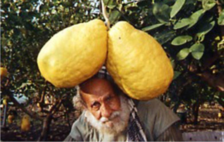 World recorder holder for largest lemons. (Source: Guinness Book of World Records)