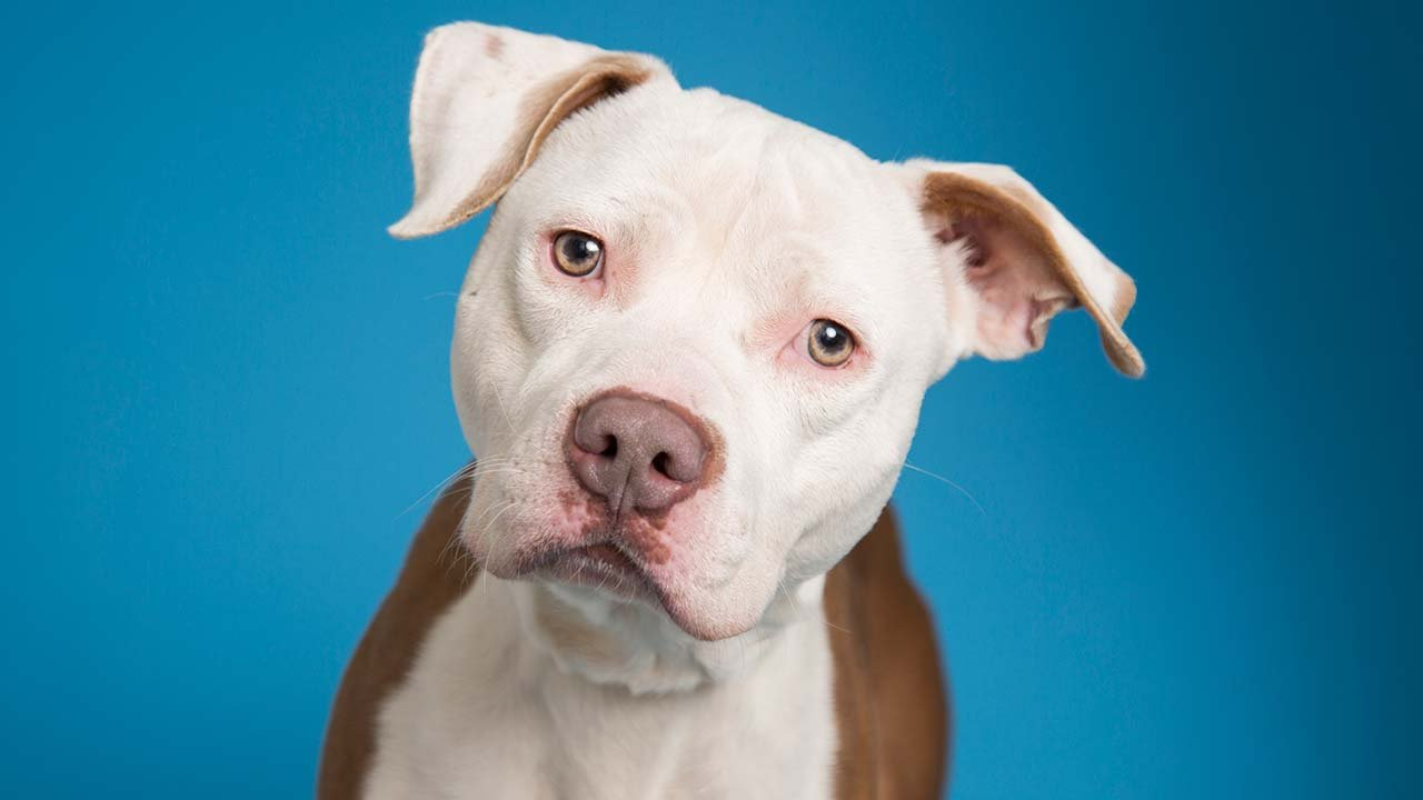 Raphael (Source: Arizona Humane Society)