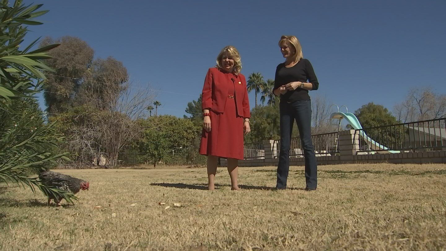 CD 8 candidate Debbie Lesko introduced our Kris Pickel to one of the two pet chickens that call her Peoria backyard home. (Source: 3TV/CBS 5)