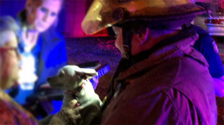 A Peoria firefighter helped reunite a dog with its owner after a late night house fire on Monday. (Source: Peoria Fire and Medical Department)