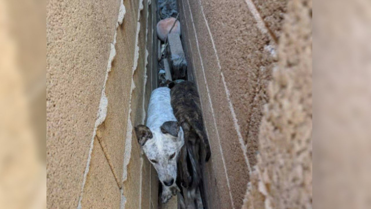 (Source: Maricopa Animal Care & Control)