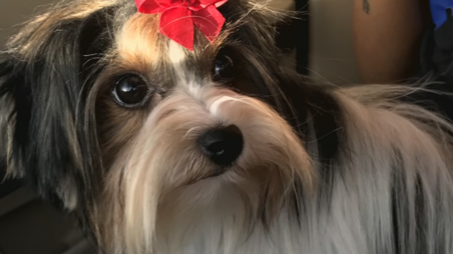 Bebe went missing after going to a dog groomer in Mesa. (Source: 3TV/CBS 5)