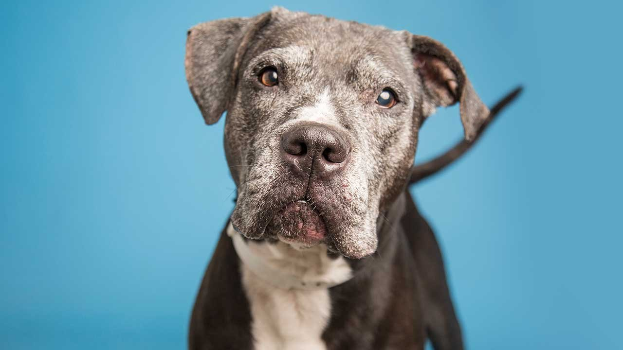 Lance (Source: Arizona Humane Society)