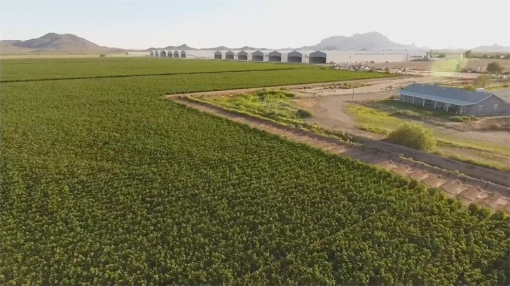 Researchers are about to begin a study of hydrogen sulfide and ammonia levels coming from both the Arlington and Tonopah farms to see if it poses a health risk to neighbors. (Source: 3TV/CBS 5)