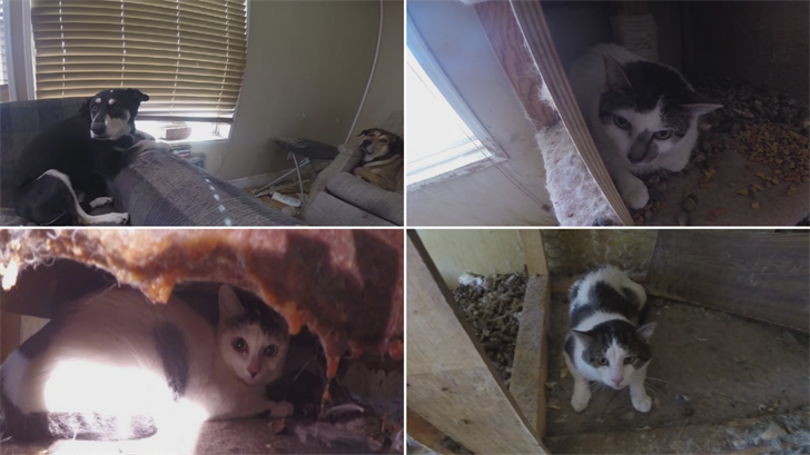 23 cats and two dogs were seized from an abandoned home in Surprise. (Source: Maricopa County Sheriff's Office)