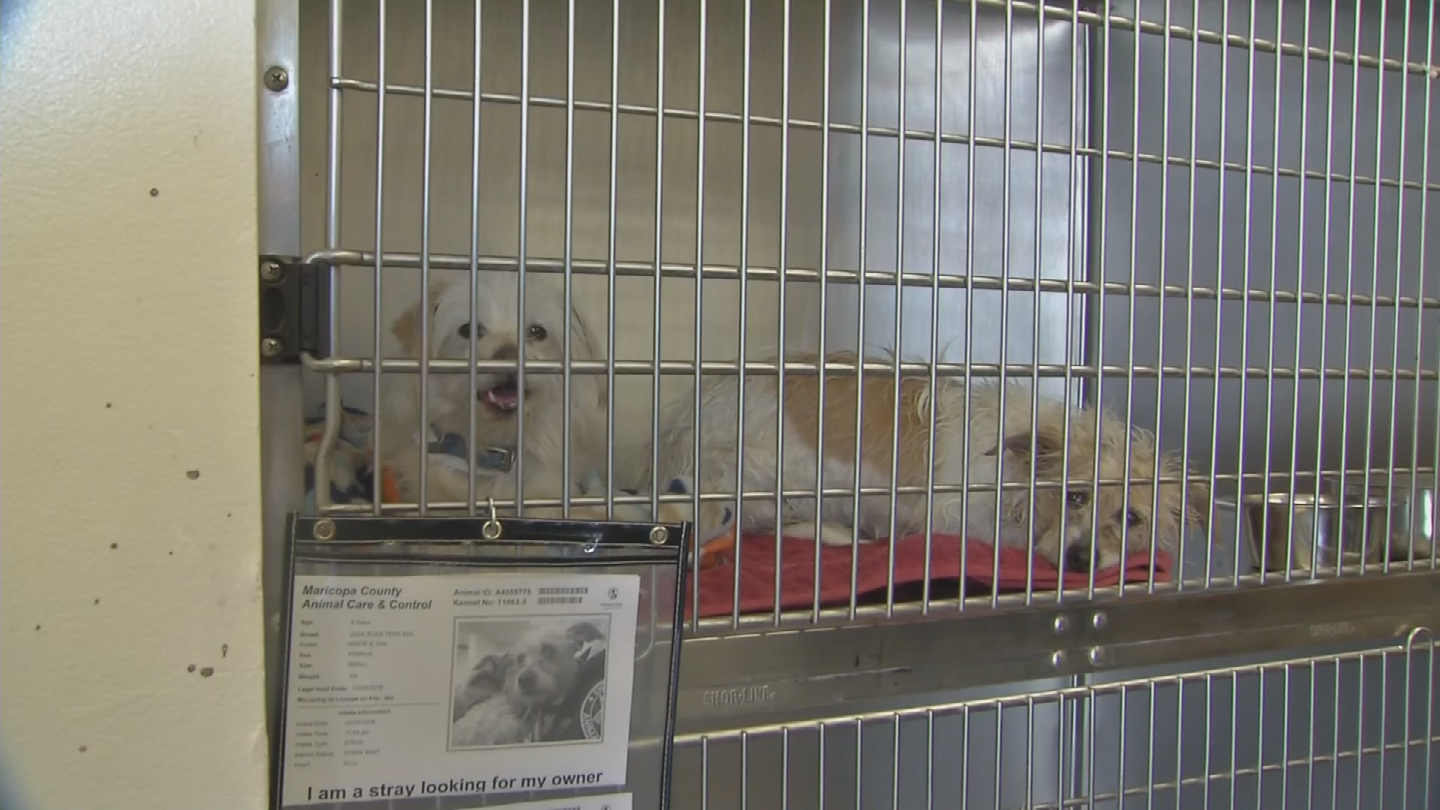 The dogs will be in quarantine for 10 days. (Source: 3TV/CBS 5)