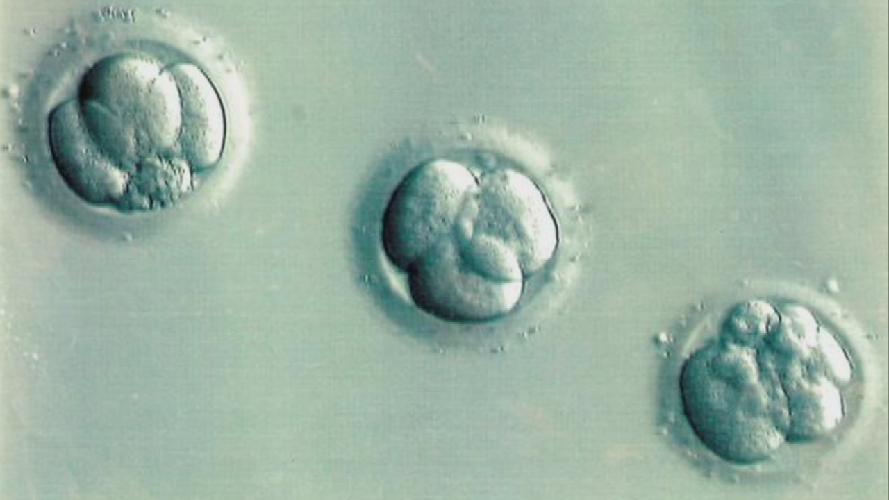 A bill would require frozen embryos to be given to the spouse who would use them during a divorce, no matter what the contract says. (Source: 3TV/CBS 5)