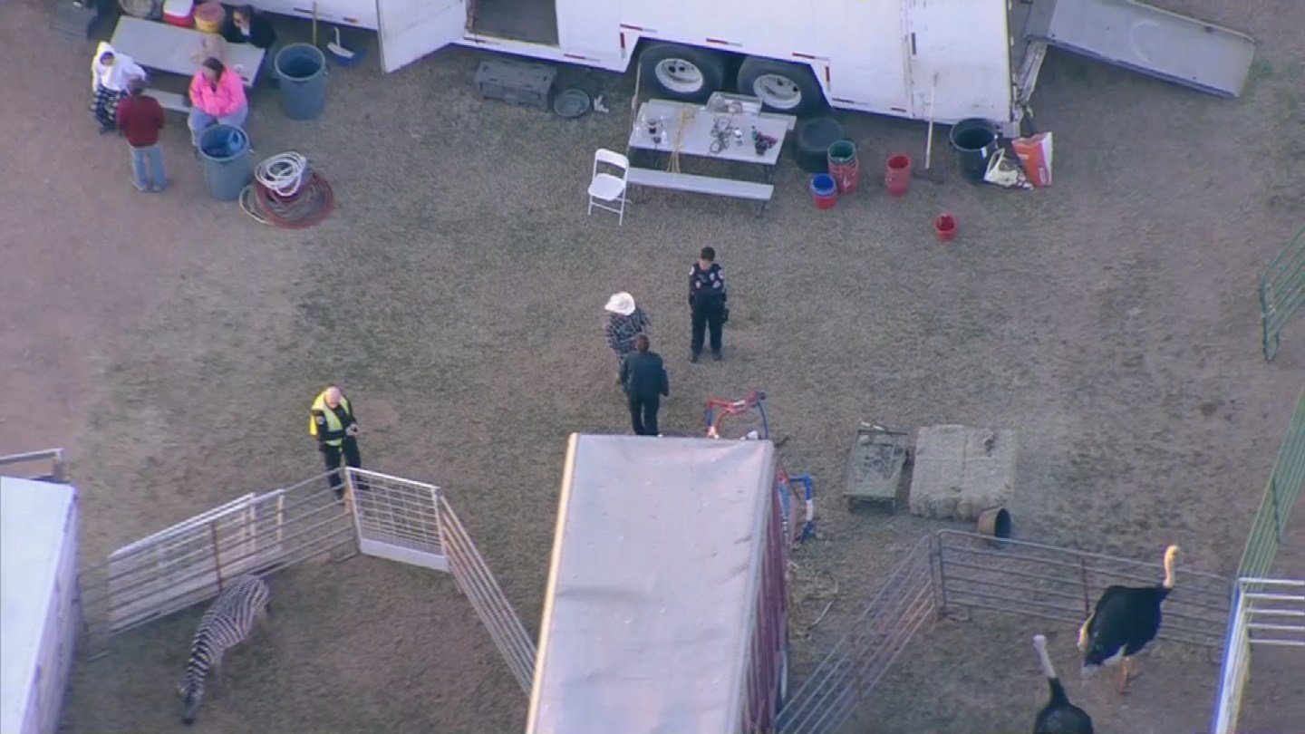 Police talk to Chandler Ostrich Festival staff about the collision. (Source: 3TV/CBS 5)