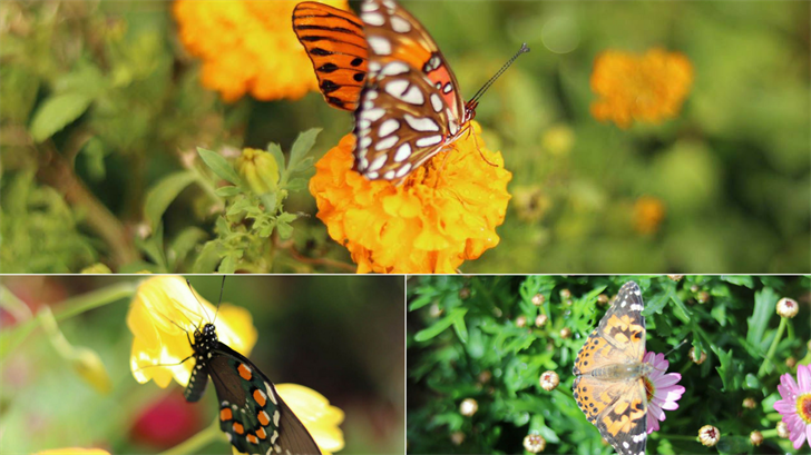 You can now get an up-close look at hundreds of North American butterflies with the opening of Desert Botanical Garden's spring butterfly exhibit. (Source: 3TV/CBS 5)