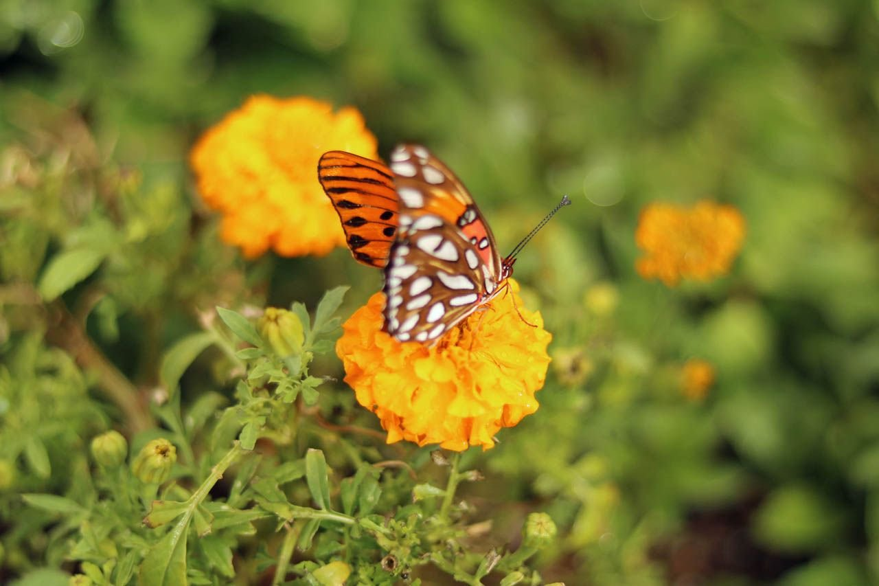 While you walk through the garden's trails you can hear tales about nature, make treats for butterflies and other fluttery friends. (Source: 3TV/CBS 5)