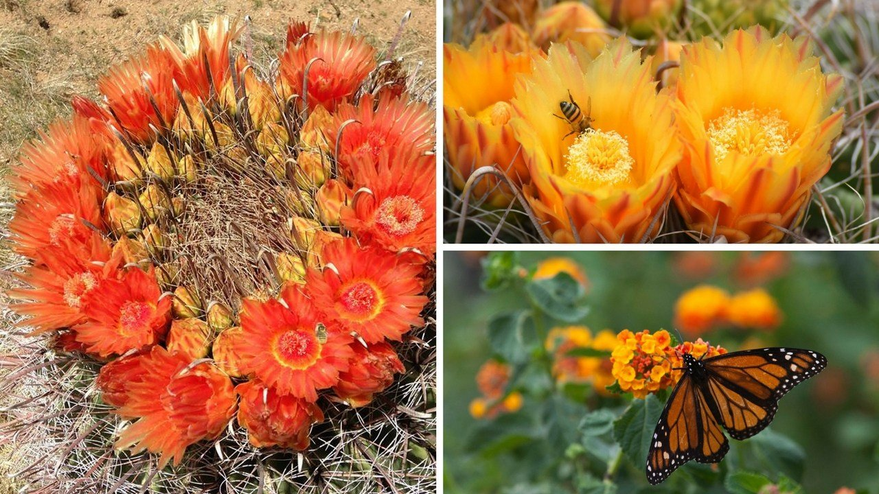 The Arizona-Sonoran Desert Museum hosts a variety of colorful blooms. (Source: Kat Rumbley)