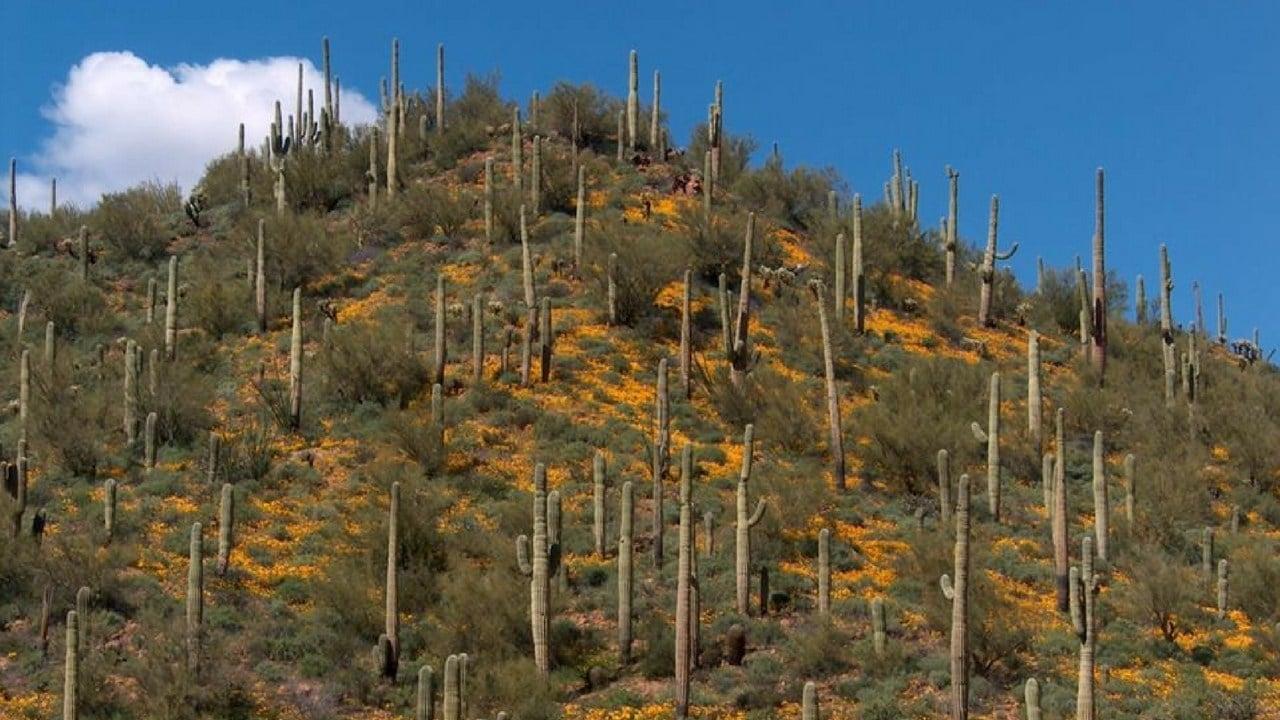 Florence-Kelvin Hwy near Riverside, Arizona. 2008 (Source: Steve Dockstader)
