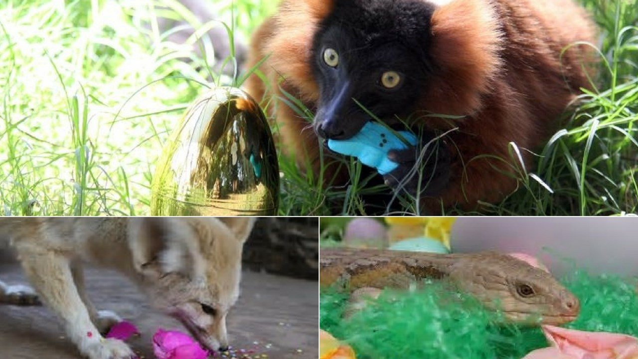 Wildlife World Easter Egg Hunt. (Source: Wildlife World Zoo, Aquarium and Safari Park)