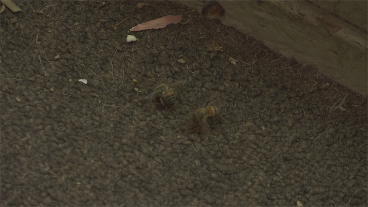 Africanized bees are aggressive and could attack anybody at any time. (Source: 3TV/CBS 5)
