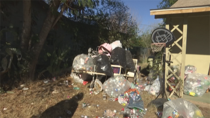 A bee exterminator was called out and says clutter may have attracted nearly 30,000 bees to the backyard. (Source: 3TV/CBS 5)