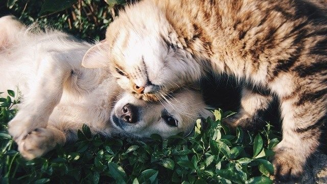 Springtime brings a lot of joy to Arizonans with plenty of sunshine and warm temperatures, but it can also reek havoc on your pets. (Source: Unsplash)