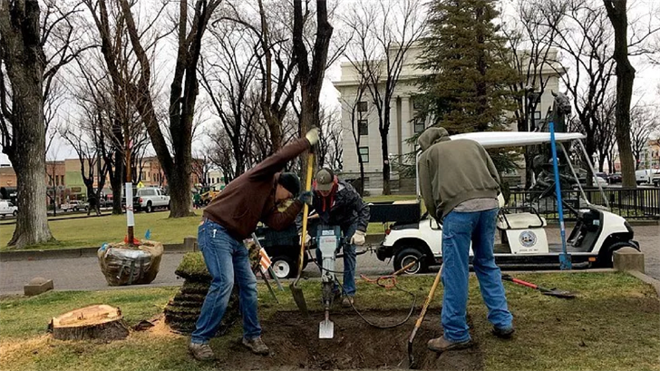 Yavapai County workers dig a hole for one of two trees being replaced on the Yavapai County Courthouse plaza. (Source: Sue Tone/The Daily Courier)