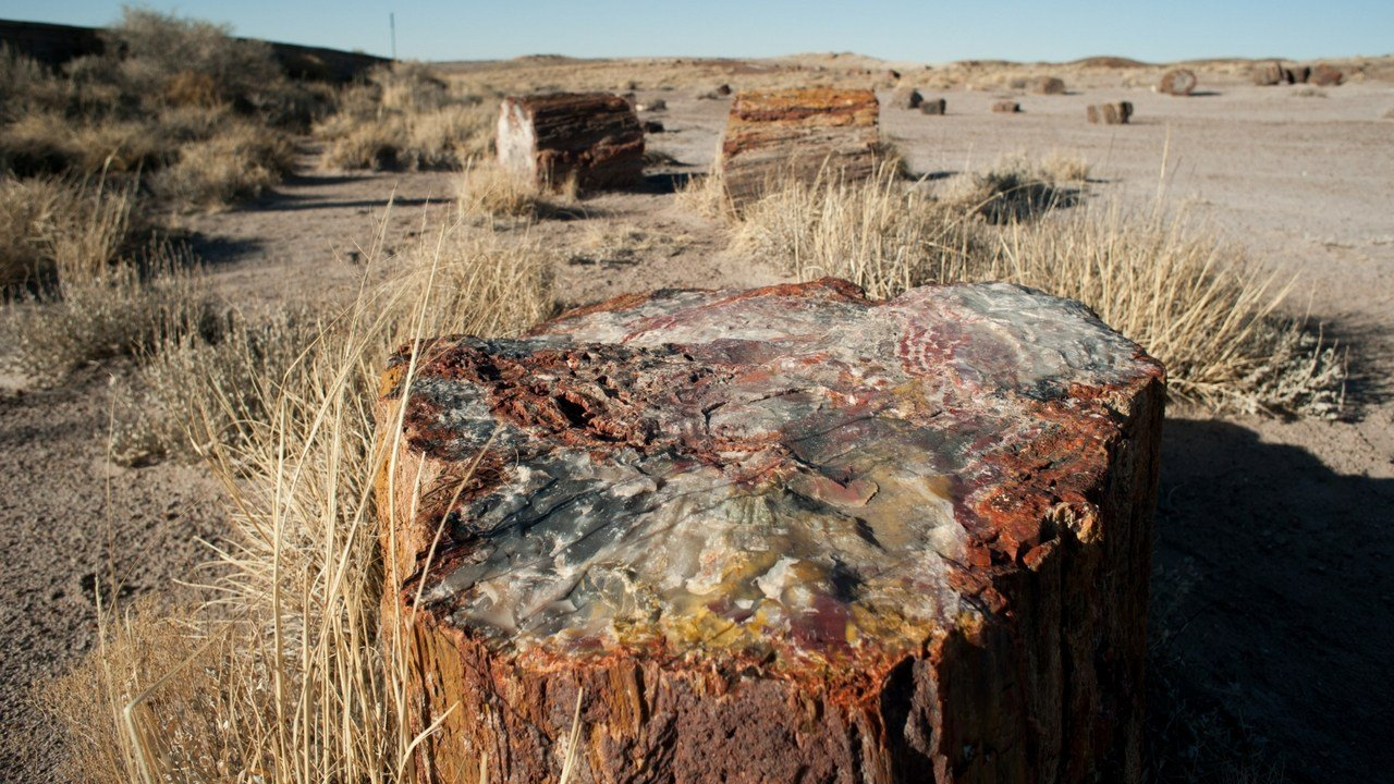 Ranger Bill Parker said Petrified Forest National Park is not missing as much petrified wood as was previously estimated. (Photo by Jesse Stawnyczy/Cronkite News)