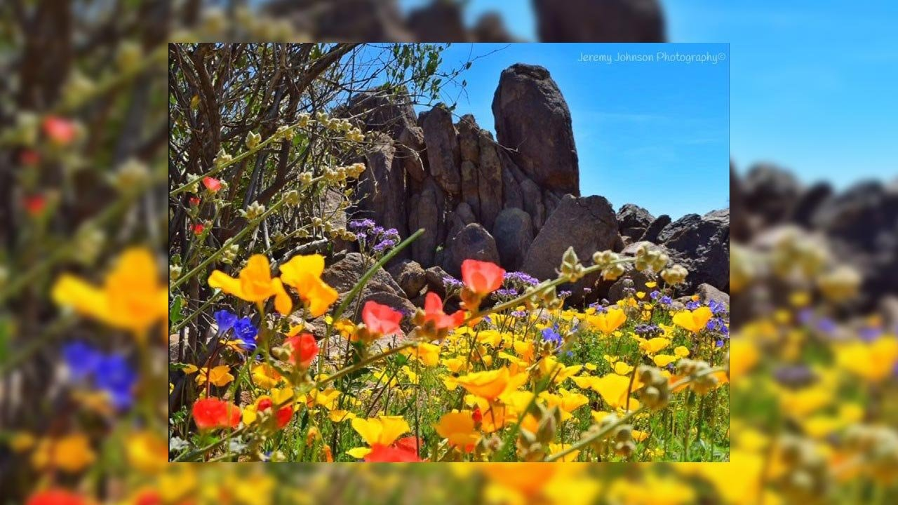 Spring wildflowers in Arizona (Source: Jeremy Johnson Photography)