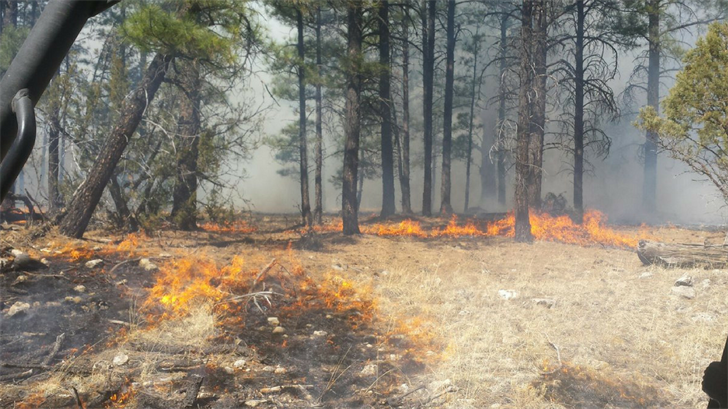 (Source: Apache-Sitgreaves National Forest)