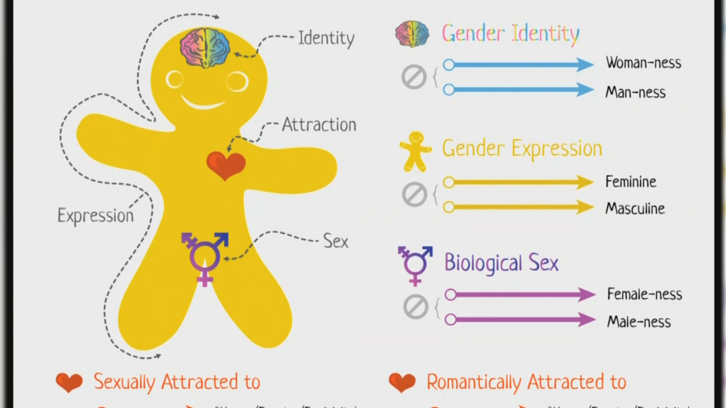 Part of the presentationgiven to one seventh-grade class at Mount Elden Middle School involved Genderbread, a graphic meant to teach gender identification, expressionand sexual attraction. (Source: 3TV/CBS 5)