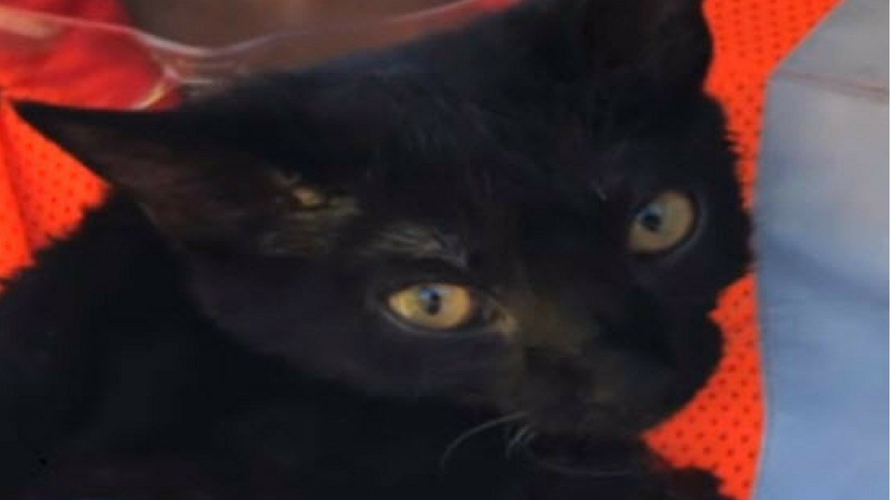 Cupcake the cat was rescued by firefighters (Source: CBS)