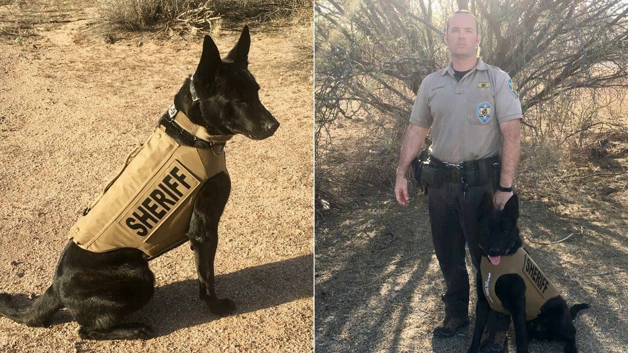 "Another four-legged officer can safely serve our community thanks to an anonymous donation that provided Maricopa County Sheriff's Office K9, ""Shadow"", with a bullet- and stab-protective vest. (Source: MCSO)"