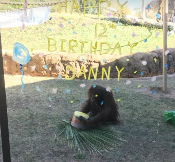 Celebrating a happy and healthy birthday (Source: The Phoenix Zoo)
