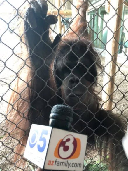 Monkeying around with 3TV/CBS 5 (Source: 3TV/CBS 5)