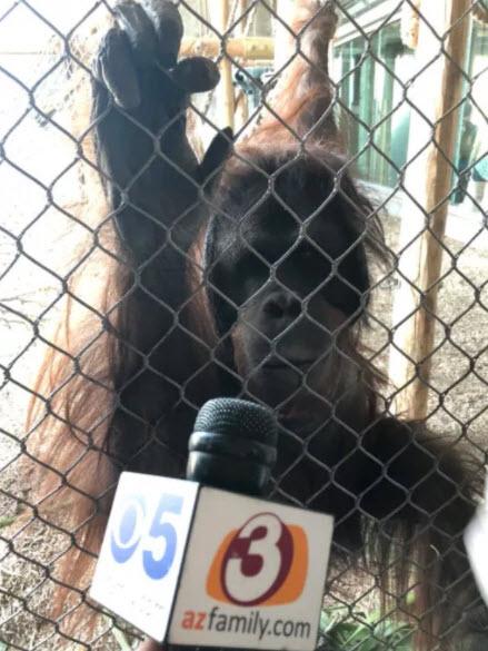 Monkeying around with 3TV/CBS 5 (Source: 3TV/CBS 5)