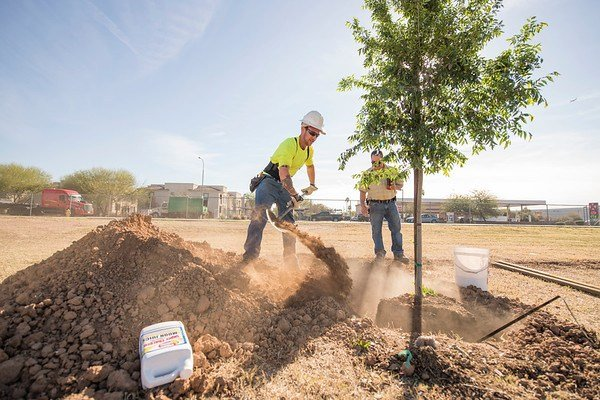 SRP and the City of Phoenix are partnering to plant 1,200 trees (Source: Salt River Project)