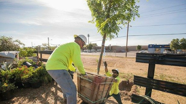 SRP and the City of Phoenix are partnering to plant 1,200 trees. (Source: Salt River Project)