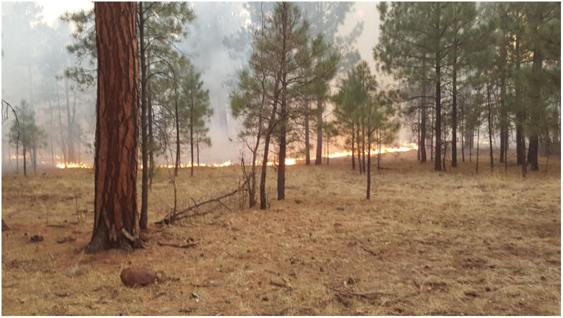 The fire has spread across the boundary to the Apache-Sitgreaves National Forestat the southern end of the Alpine Ranger District. (Source: Inciweb)