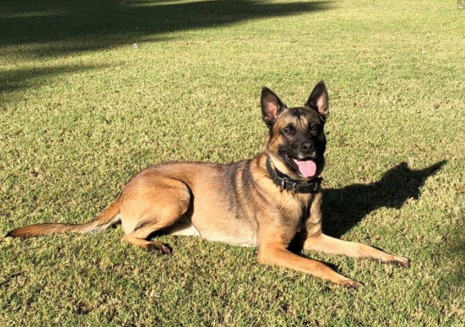 Bane, the police dog was killed in the line of duty after Tuesday's chase (Source: 3TV/CBS 5)
