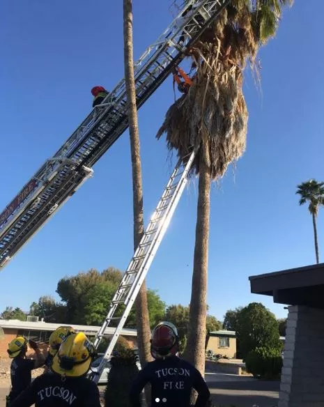 (Source: Tucson Fire Department)