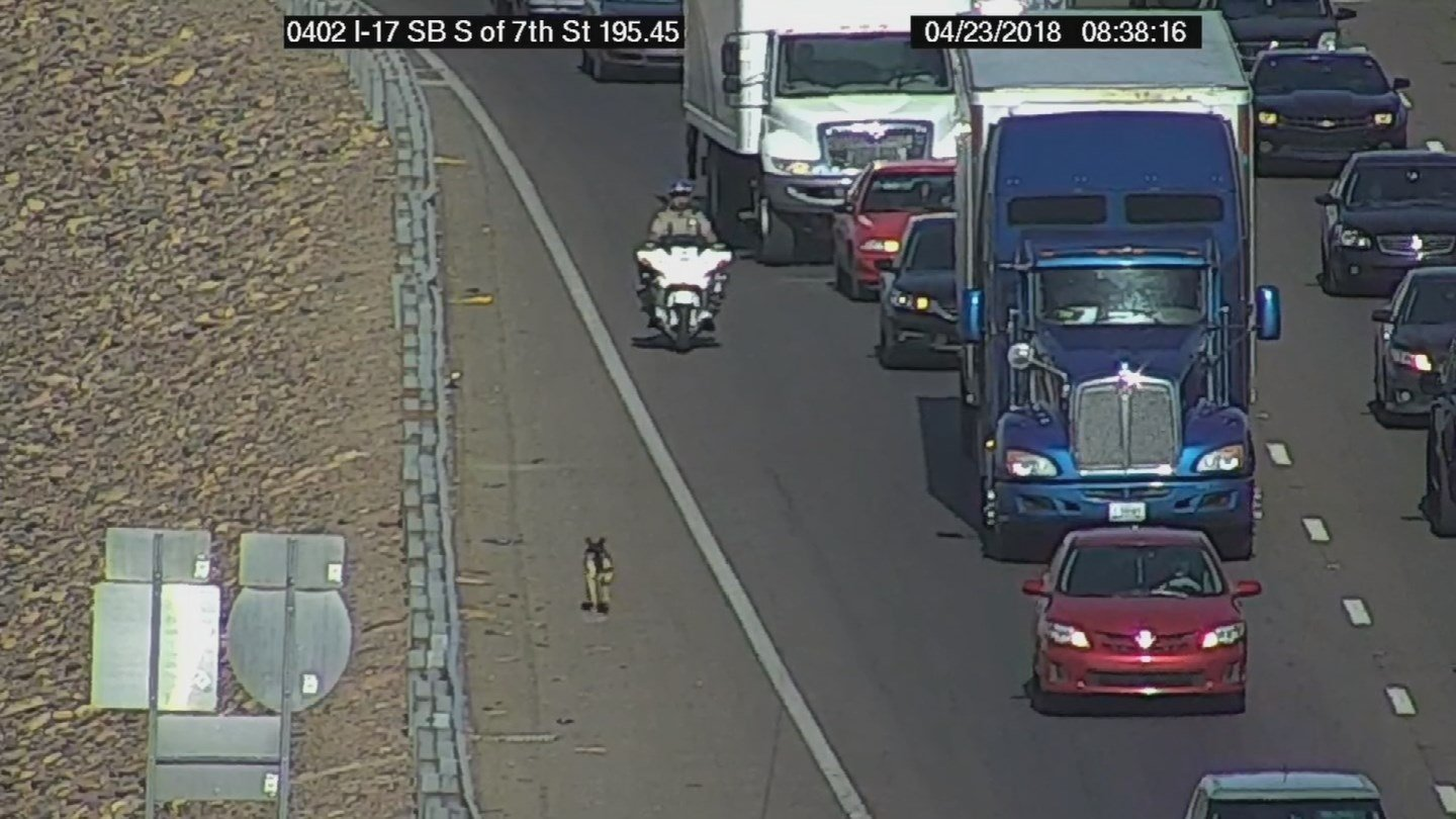A large dog was hit by car on Interstate 17 in Phoenix on Monday morning. (Source: Arizona Dept. of Transportation)