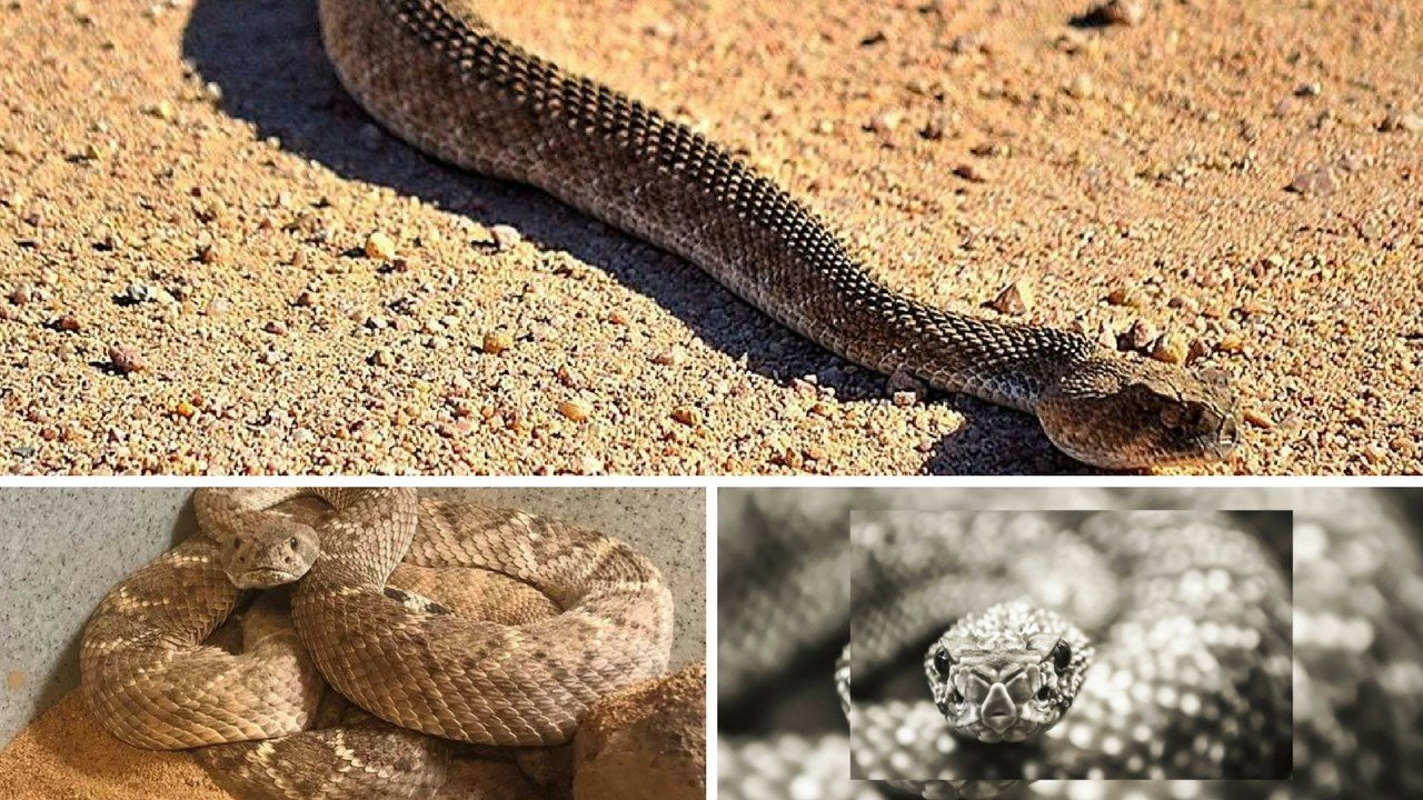 Warm weather has brought out the snakes. (Source: 3TV/CBS 5 News)