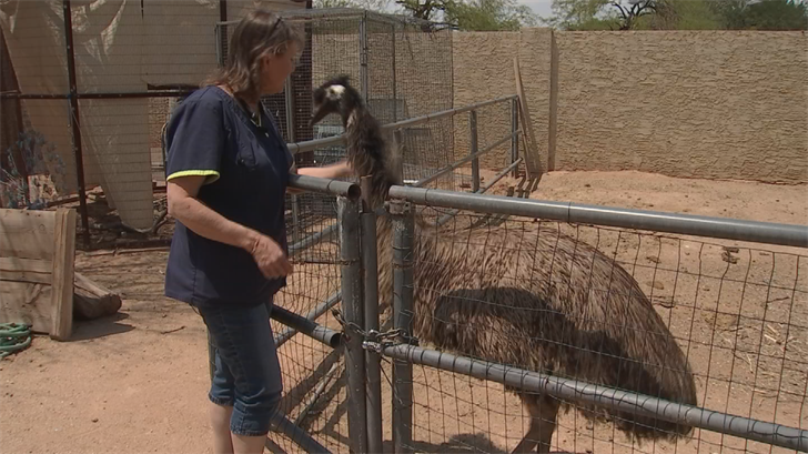 "For the past 20 years, the West Valley grandmother has been taking care of some cute little creatures as part of her non-profit ""Fallen Feathers."" (Source: 3TV/CBS 5)"
