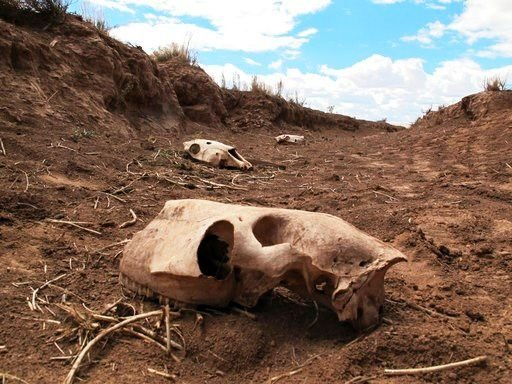 This Thursday, May 3, 2018 photo shows skeletal remains of animals in a ravine adjacent to a watering hole where dozens of horses were discovered dead near Cameron, Ariz. (Source: AP Photo/Felicia Fonseca)