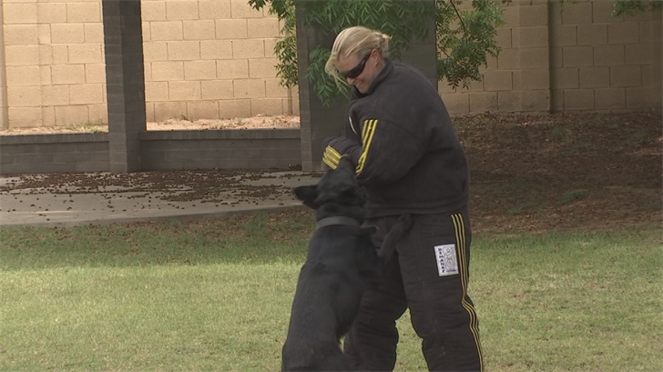 K-9s specialize in finding criminals and stopping them in their tracks. (Source: 3TV/CBS 5)