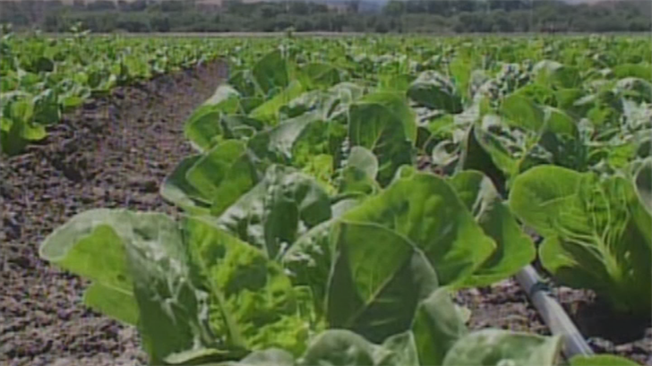 Information collected thus far indicates that chopped romaine lettuce from Yuma could be the cause of the outbreak and is making people sick. (Source: 3TV/CBS 5)