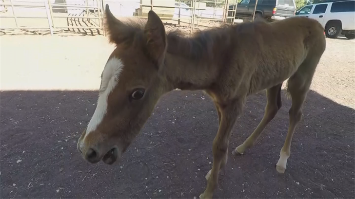 A baby foal was the only horse that survived after its herd died in a mud pit. (Source: 3TV/CBS 5)