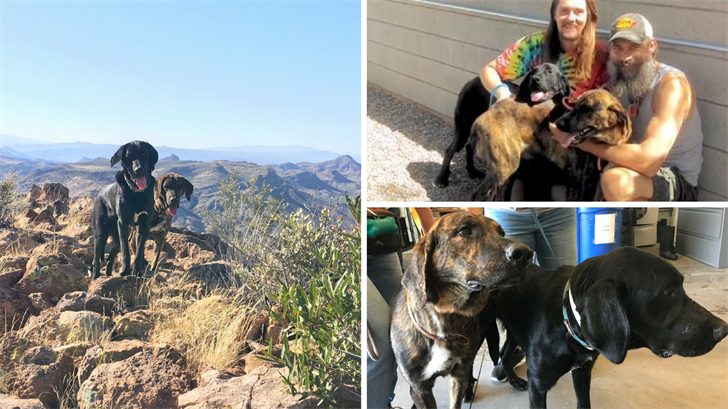 'Calvin' and 'Hobbs' are a pair of bonded dogs who were found stuck on a mountain in Superior, AZ. They now have found their forever home! (Source: Maricopa County Animal Care and Control)